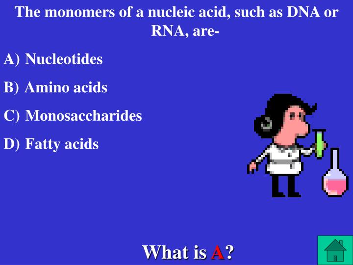 The monomers of a nucleic acid, such as DNA or RNA, are-
