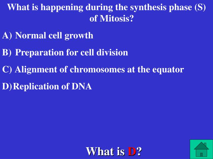 What is happening during the synthesis phase (S) of Mitosis?