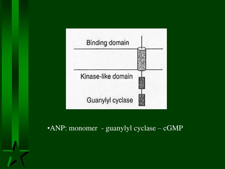 ANP: monomer  - guanylyl cyclase – cGMP
