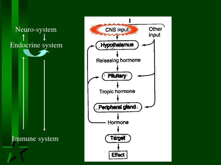 Neuro-system