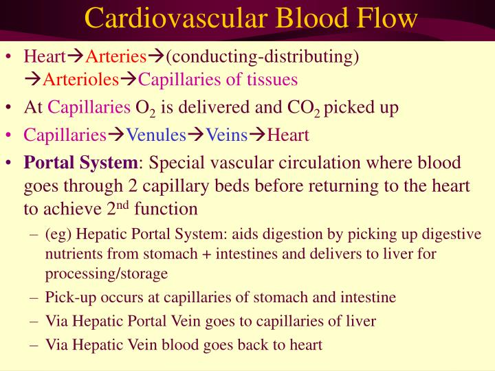 Cardiovascular Blood Flow