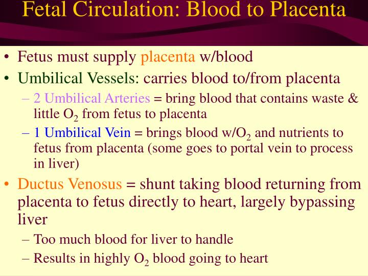 Fetal Circulation: Blood to Placenta