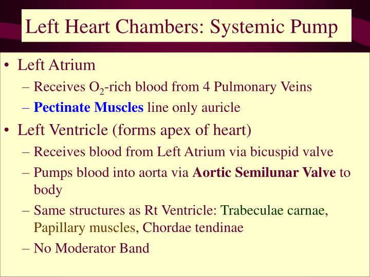 Left Heart Chambers: Systemic Pump