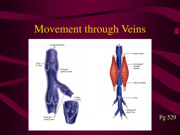 Movement through Veins