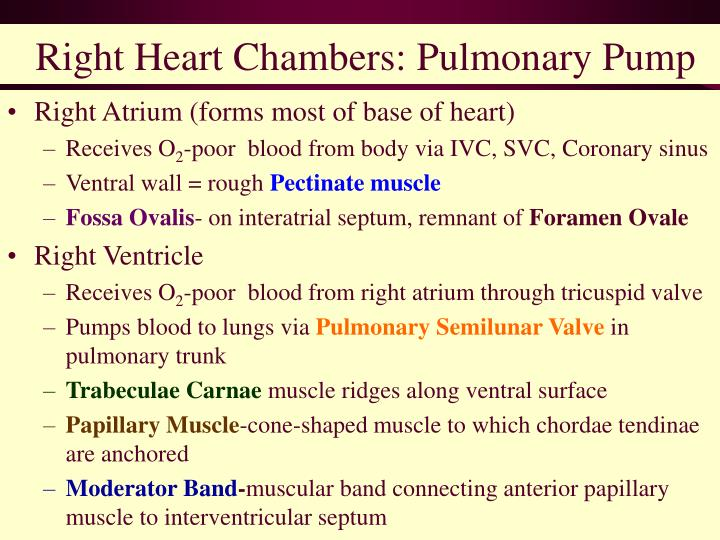 Right Heart Chambers: Pulmonary Pump
