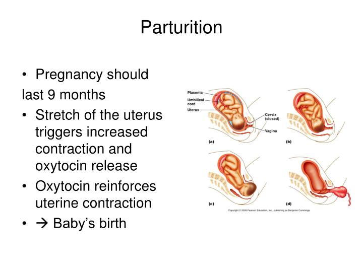 Pregnancy should