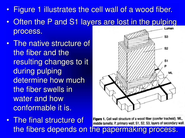 Figure 1 illustrates the cell wall of a wood fiber.