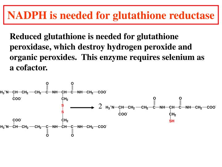 NADPH is needed for glutathione reductase