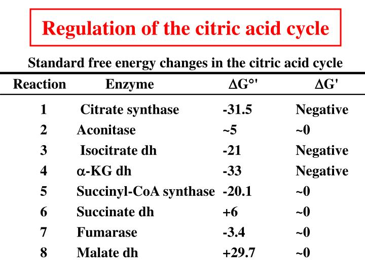 Regulation of the citric acid cycle