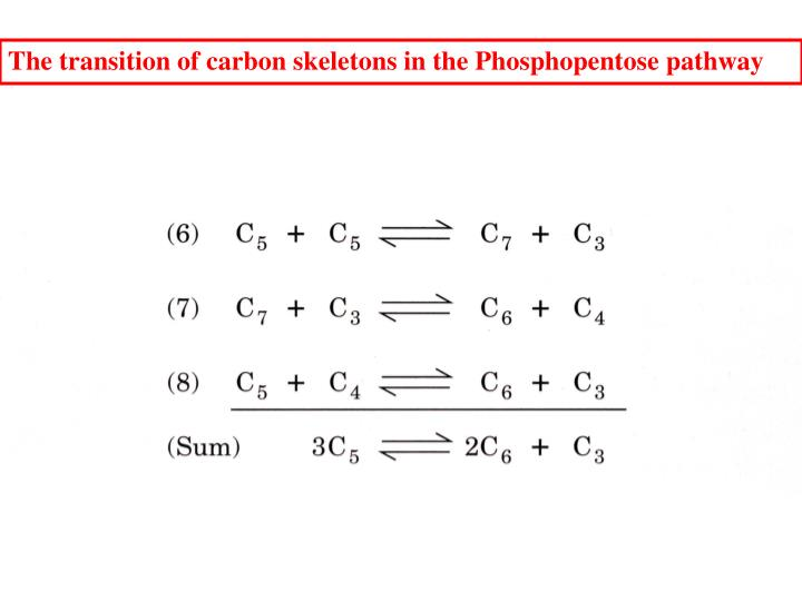 The transition of carbon skeletons in the Phosphopentose pathway
