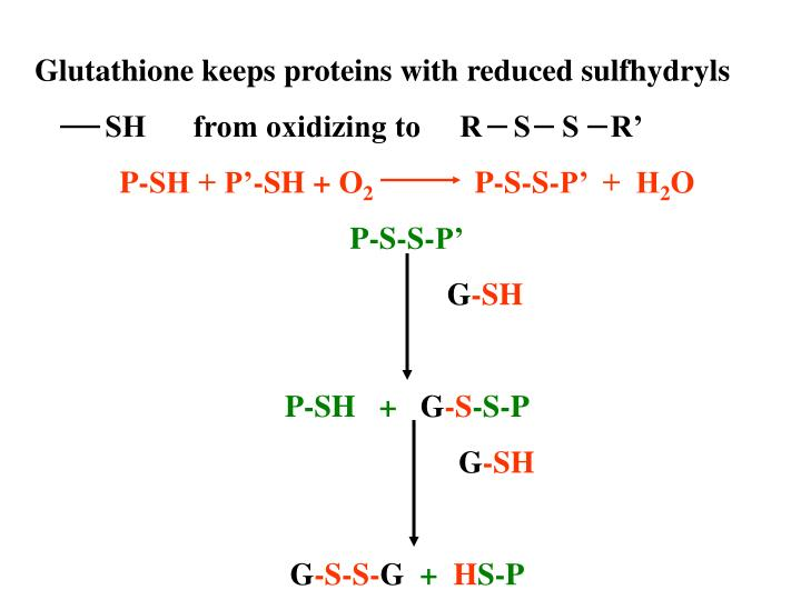 Glutathione keeps proteins with reduced sulfhydryls