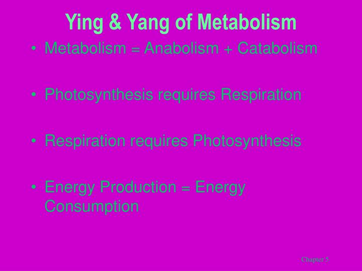 Ying & Yang of Metabolism