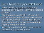how a typical blue gum project works