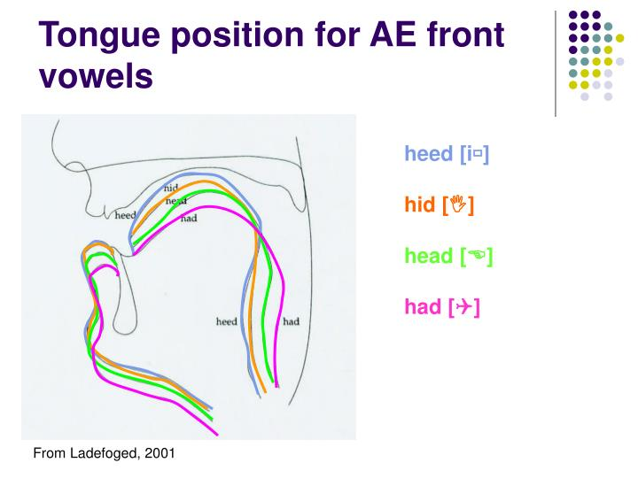 Tongue position for AE front vowels