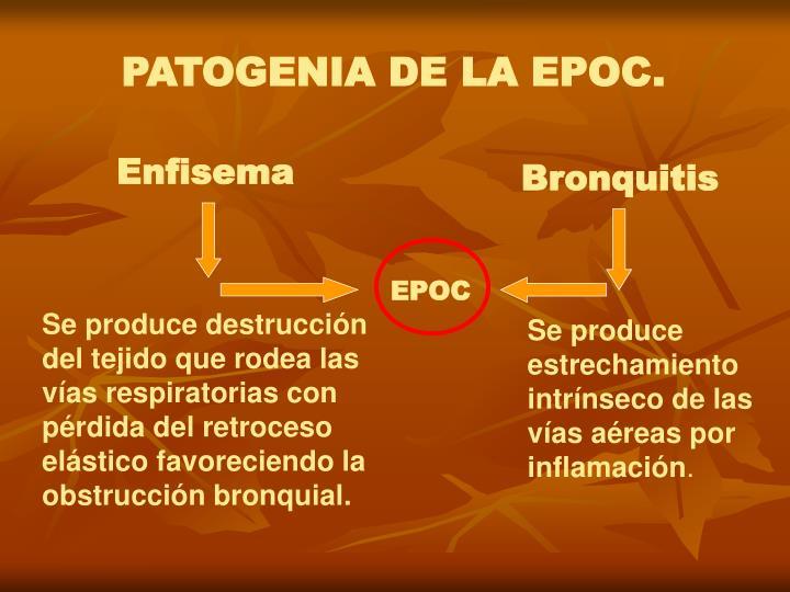 PATOGENIA DE LA EPOC.
