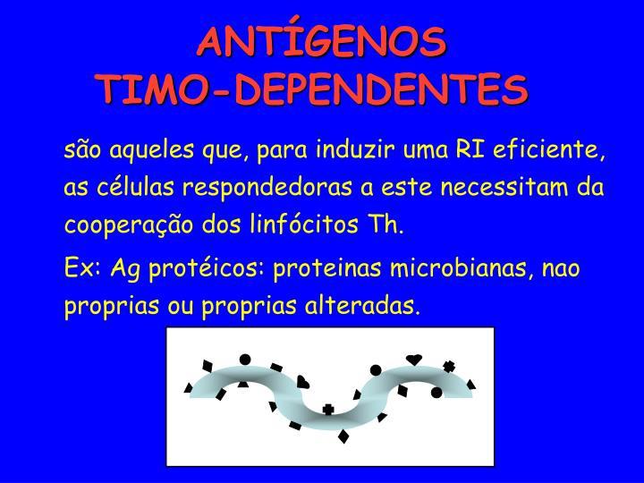 são aqueles que, para induzir uma RI eficiente, as células respondedoras a este necessitam da cooperação dos linfócitos Th.