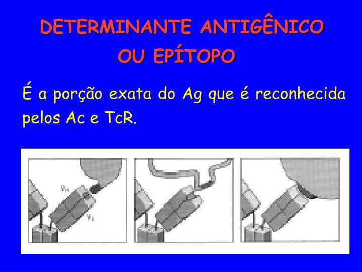 É a porção exata do Ag que é reconhecida pelos Ac e TcR.