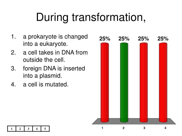 During transformation,