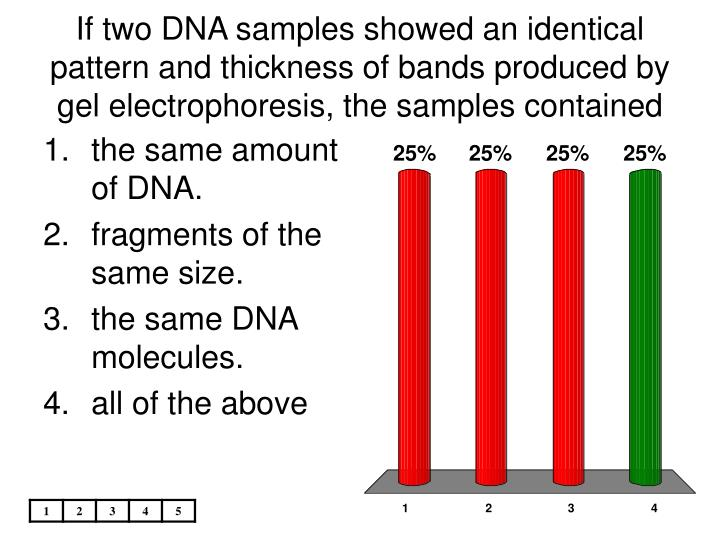 If two DNA samples showed an identical pattern and thickness of bands produced by gel electrophoresis, the samples contained