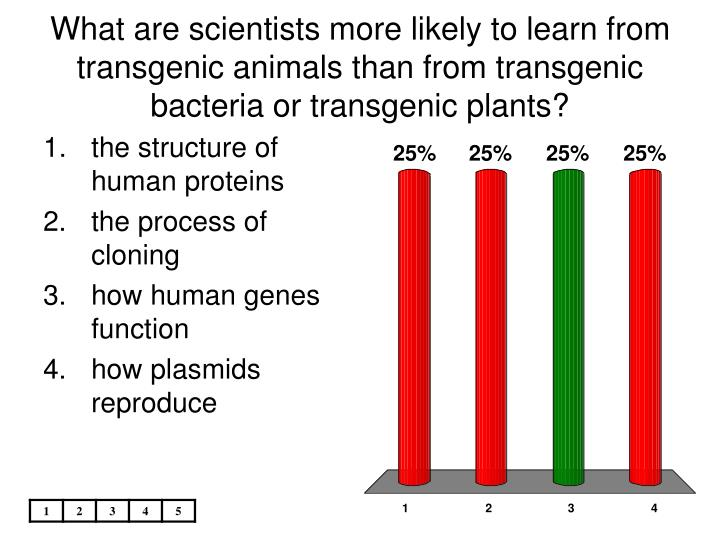 What are scientists more likely to learn from transgenic animals than from transgenic bacteria or transgenic plants?