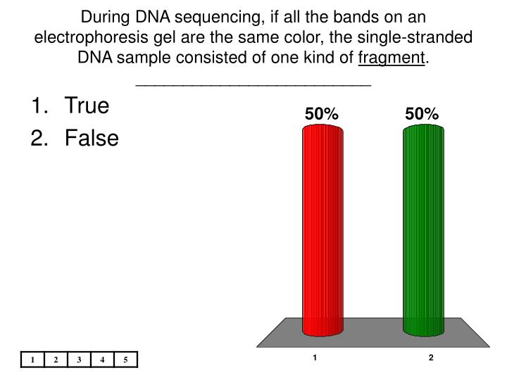 During DNA sequencing, if all the bands on an electrophoresis gel are the same color, the single-stranded DNA sample consisted of one kind of