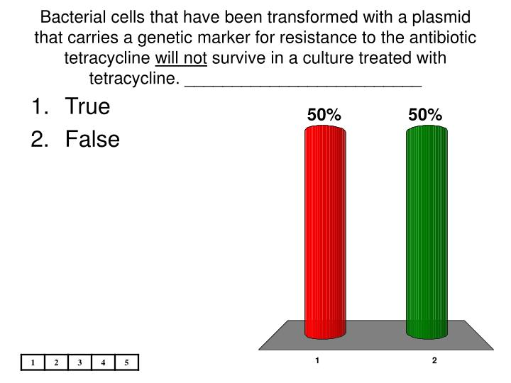 Bacterial cells that have been transformed with a plasmid that carries a genetic marker for resistance to the antibiotic tetracycline