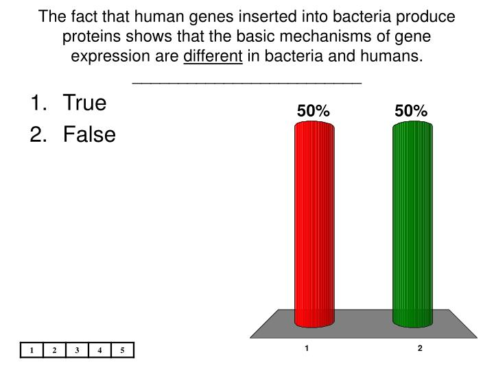 The fact that human genes inserted into bacteria produce proteins shows that the basic mechanisms of gene expression are