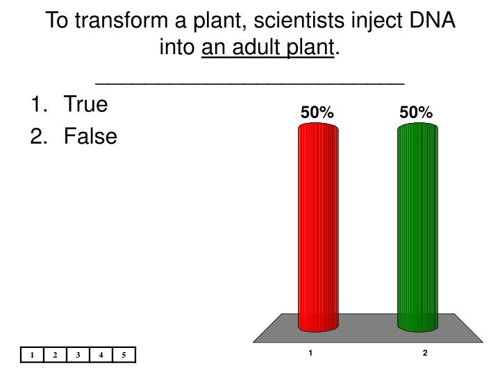 To transform a plant, scientists inject DNA into