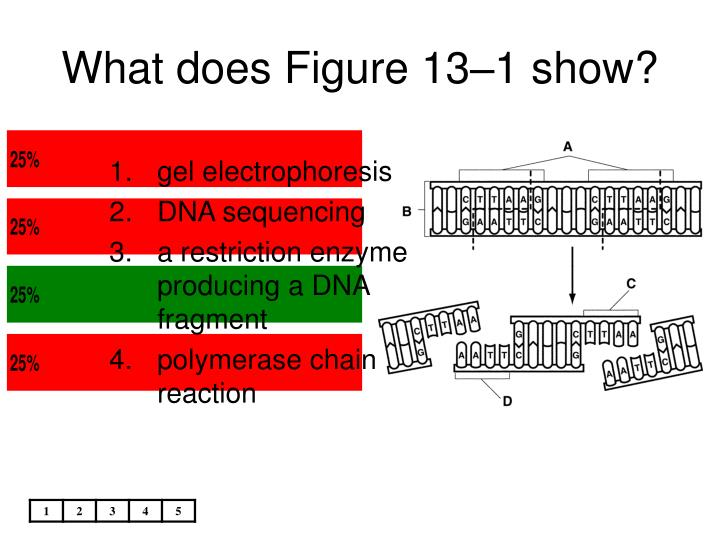 What does Figure 13–1 show?