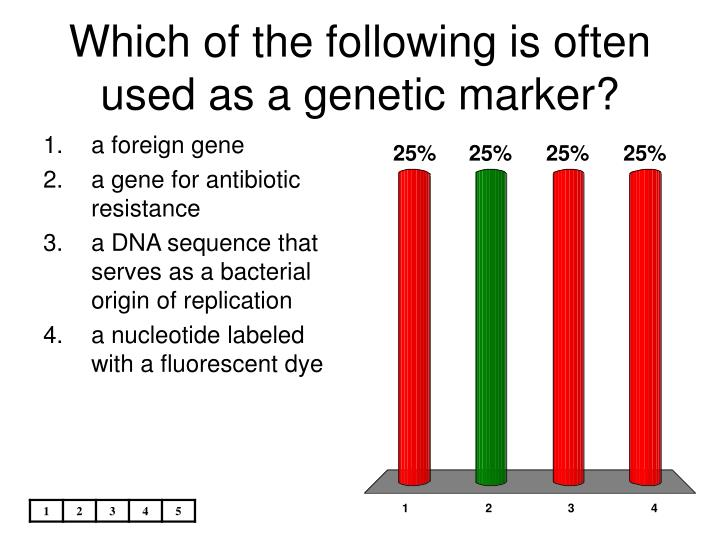 Which of the following is often used as a genetic marker?