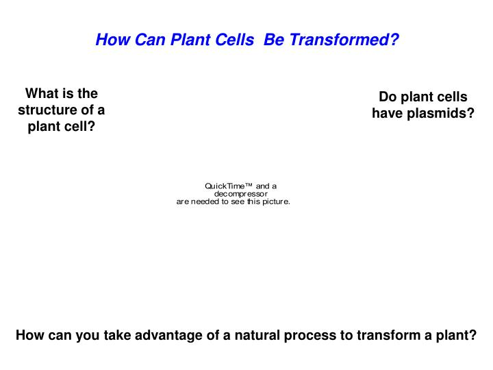How Can Plant Cells  Be Transformed?