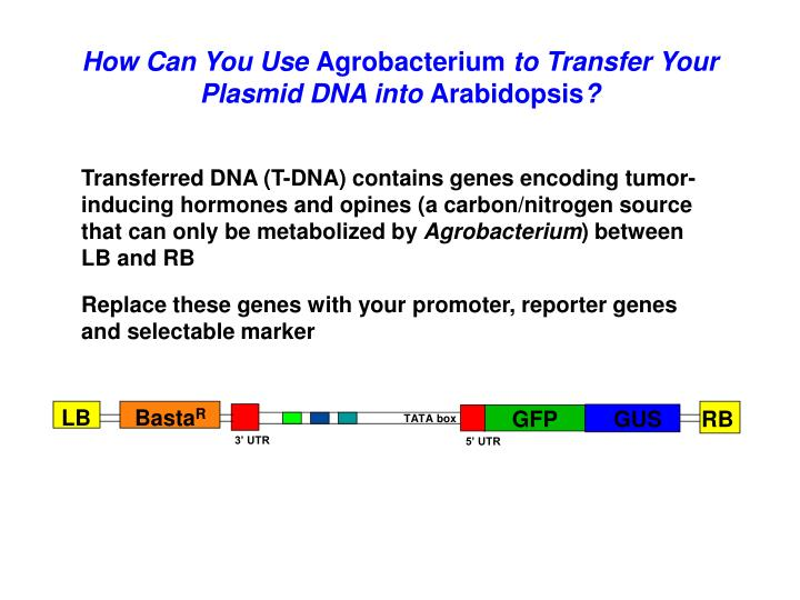 Replace these genes with your promoter, reporter genes and selectable marker