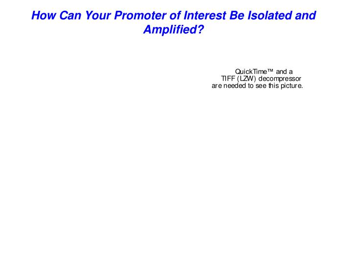 How Can Your Promoter of Interest Be Isolated and Amplified?