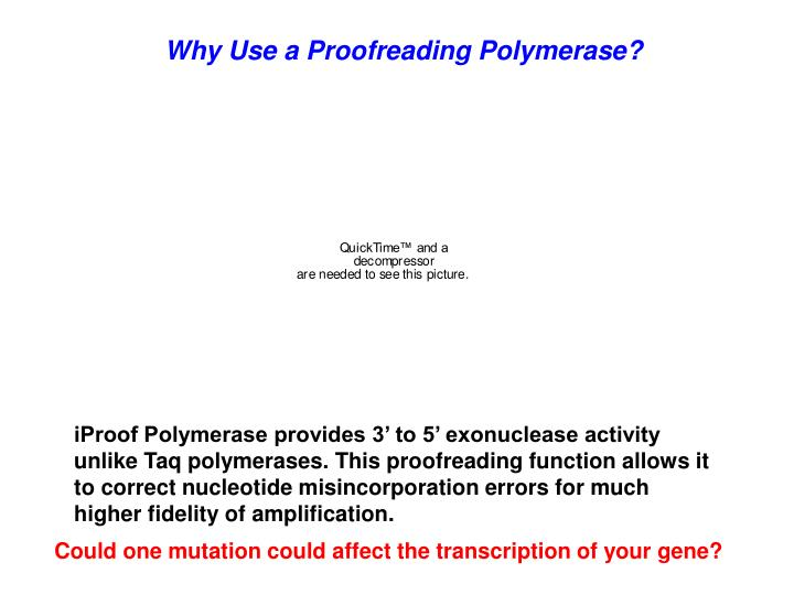 Why Use a Proofreading Polymerase?