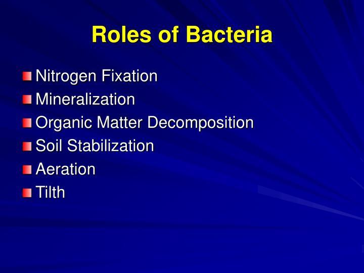 Roles of Bacteria