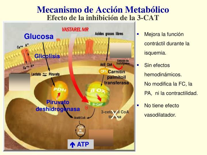 Mecanismo de Acción Metabólico