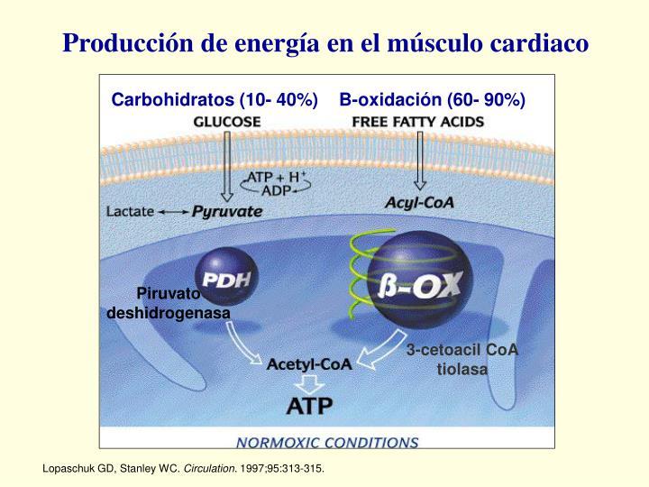 Producción de energía en el músculo cardiaco