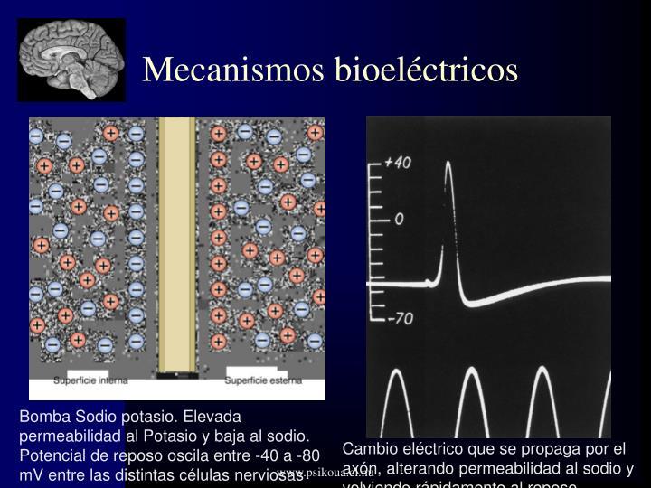 Mecanismos bioeléctricos