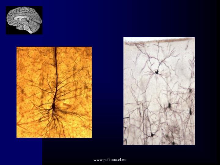 www.psikoua.cl.nu