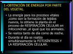 1 obtenci n de energia por parte del vegetal