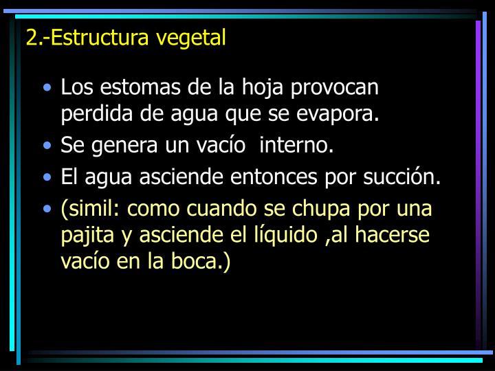 2.-Estructura vegetal