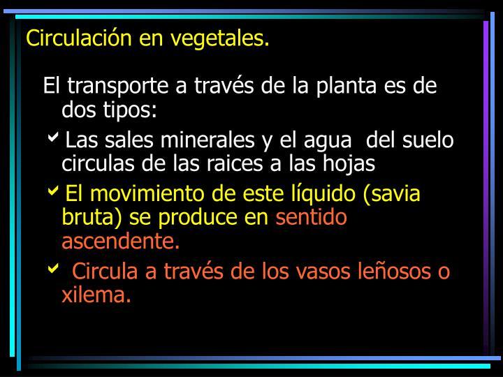 Circulación en vegetales.