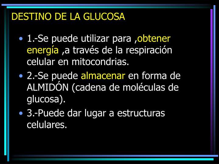 DESTINO DE LA GLUCOSA