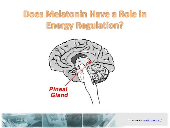 Does melatonin have a role in energy regulation