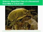 science magnified view of a household dust mite in a dust ball