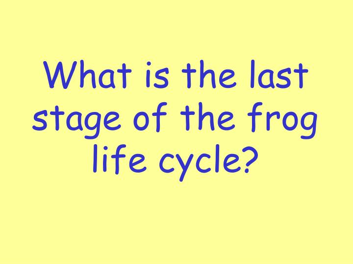 What is the last stage of the frog life cycle?