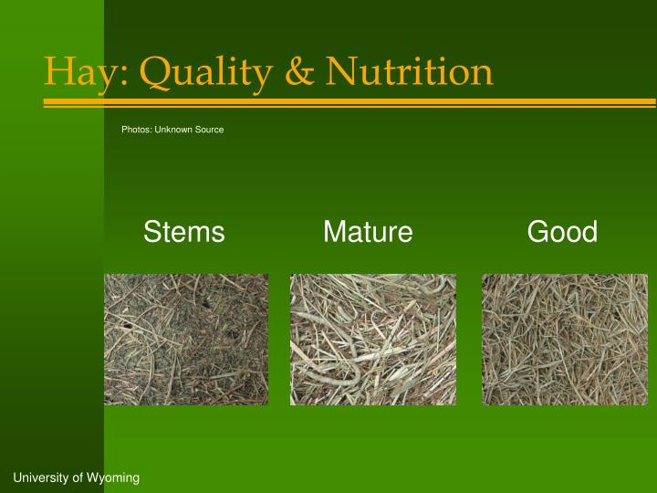 Hay: Quality & Nutrition