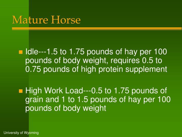Mature Horse