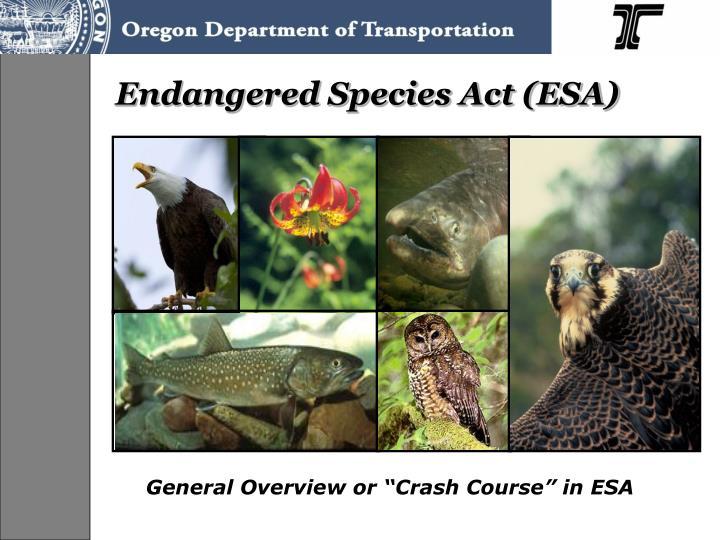 Endangered Species Act (ESA)