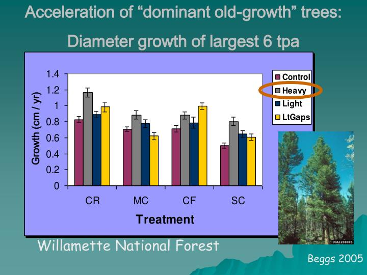"""Acceleration of """"dominant old-growth"""" trees:"""